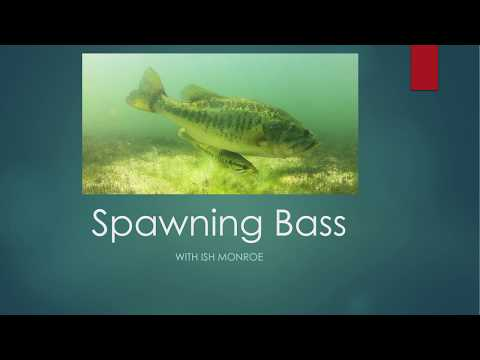 Bed Fishing 101 : How To Catch Bass During Spawn W/ Ish Monroe