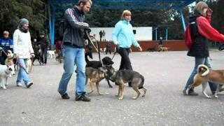 """У каждой собаки должен быть дом! Приют """"Эко"""". 25.09.11."""