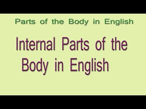 Internal Body parts in English   Internal Parts of the Body