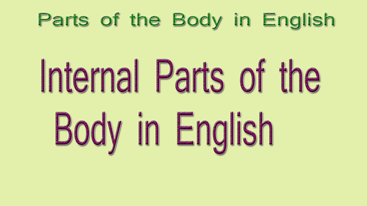 Internal Body Parts In English Internal Parts Of The Body In