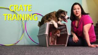 Crate Training For Travel / Sleep / Confinement - Dog Behavior [Preview]