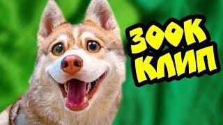 ЯНТАРНЫЕ ГЛАЗКИ! Премьера клипа на 300К ПОДПИСЧИКОВ (Хаски Бублик) Говорящая собака Mister Booble