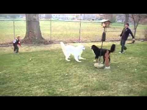 perro juega futbol americano con sus duenos