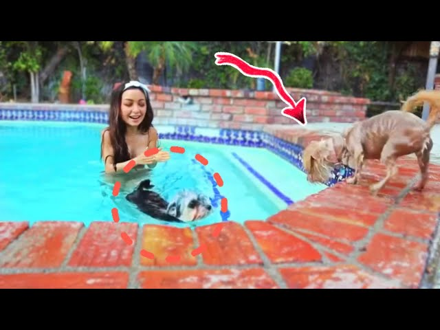 Le enseño a nadar a mis perros *Se ven súper graciosos😂*
