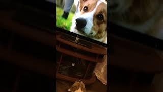 Приятней фильм с участием собаки:)