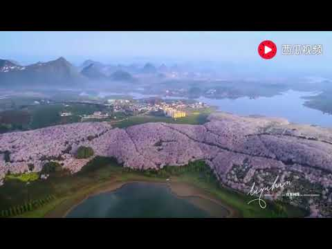 Guizhou China: this is the most beautiful cherry blossom landscape in the world