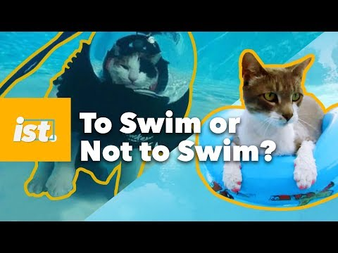 Swimming: How Come Cats Can But We Cant Swim Innately?