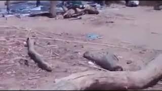 Mali : Près de 100 morts dans l'attaque d'un village à Bandiagara