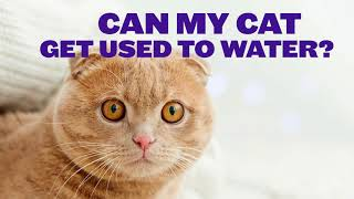 The Reason Why Your Cat Hates Water!