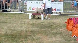 Baroof Cairn Terrier Manche 3 Agility Cat A