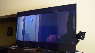 InFocus II-50EA800 Full-HD LED TV Review