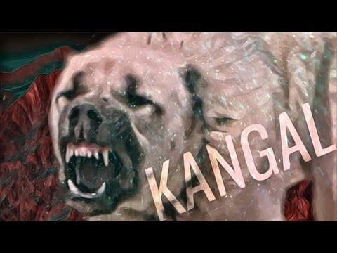 turkish kangal videos kangal attack anatolian shepherd dog youtube. Black Bedroom Furniture Sets. Home Design Ideas