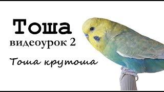 """🎤 Учим попугая по имени Тоша говорить. Видеоурок 2: """"Тоша - крутоша!"""""""