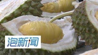 14/08: 榴莲神州大地飘香  猫山王前景好