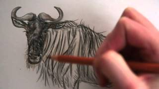 Drawing A Wildebeest