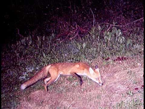 West Virginia 2010 trail cam pics