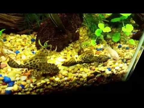Nualgi Aquarium 12th Dose And Plant Updated