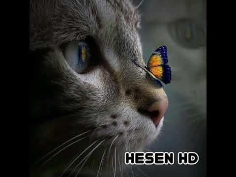 Hiss-İstəmirəm 2019 Yeni Azeri Bass Music