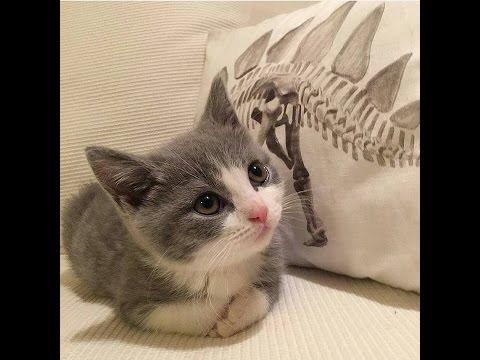 Vine #4 Cats