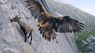 15 Deadliest Eagles in the World