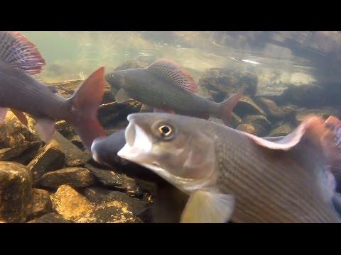 рыбалка на большом питу таймень хариус