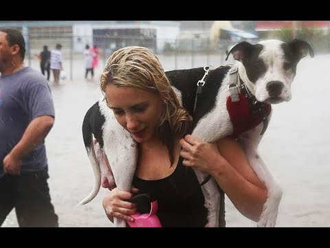 Hurricane Harvey And The Bonds Between People And Pets