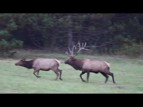Pennsylvania Hunting Powerhouse-License Update