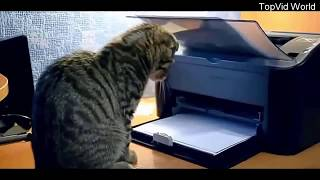 Очень смешные приколы с котами