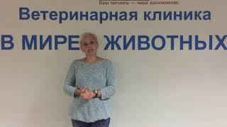 Ветеринарная клиника в мире животных, в Подольске