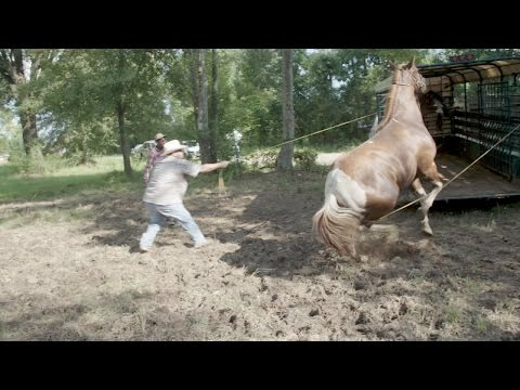 Rescuing Horses is Harder Than it Looks