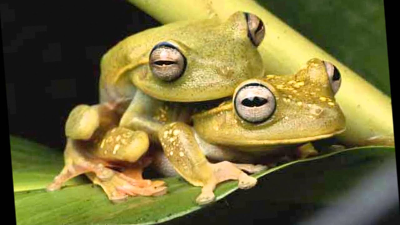 I dont know what the fuck is going on but the frog fucks good