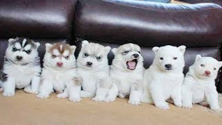 Cute is Not Enough - Funny Cats and Dogs Compilation #239