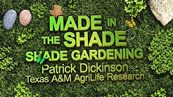 Made in the Shade : Shade Gardening in North Texas