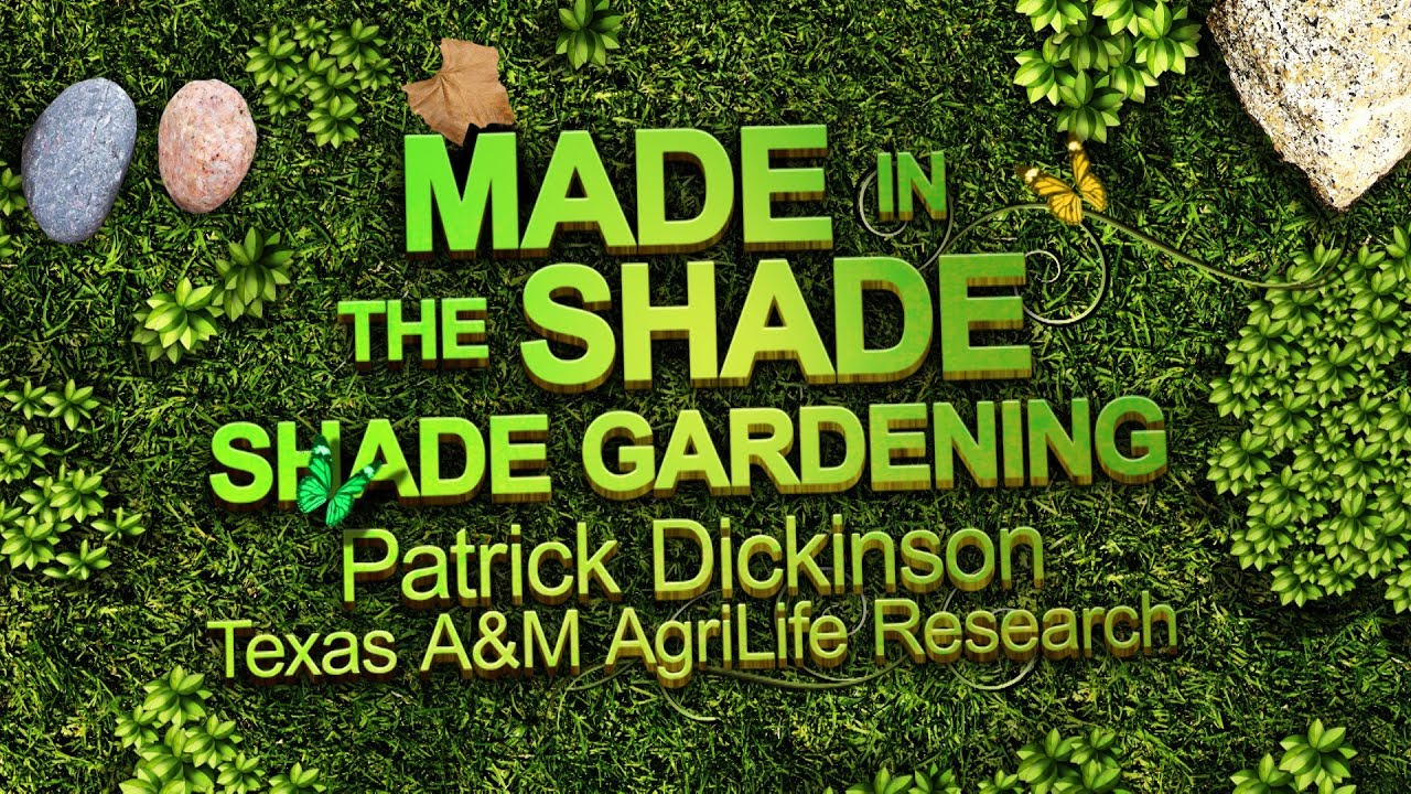 Made In The Shade Shade Gardening In North Texas Youtube