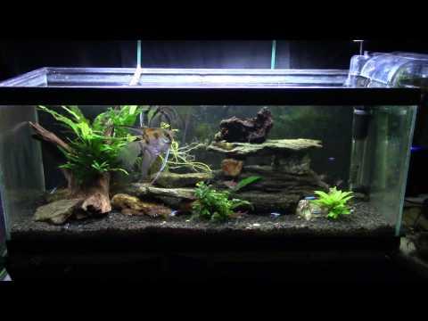 Aquarium Lighting, Color Temp. And Cyanobacteria