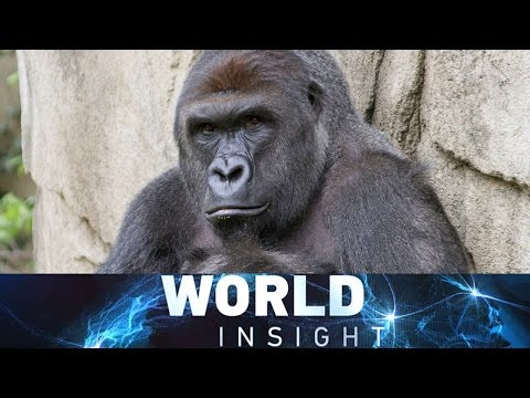 World Insight— DPRK missile launch; Harambe controversy 06/02/2016