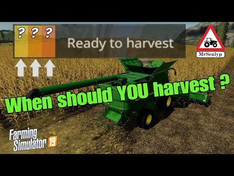 A Guide to... When should YOU harvest? (Ready to harvest!). Farming Simulator 19, PS4, Assistance!