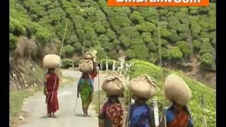 Labour in Tea Plantation of munnar