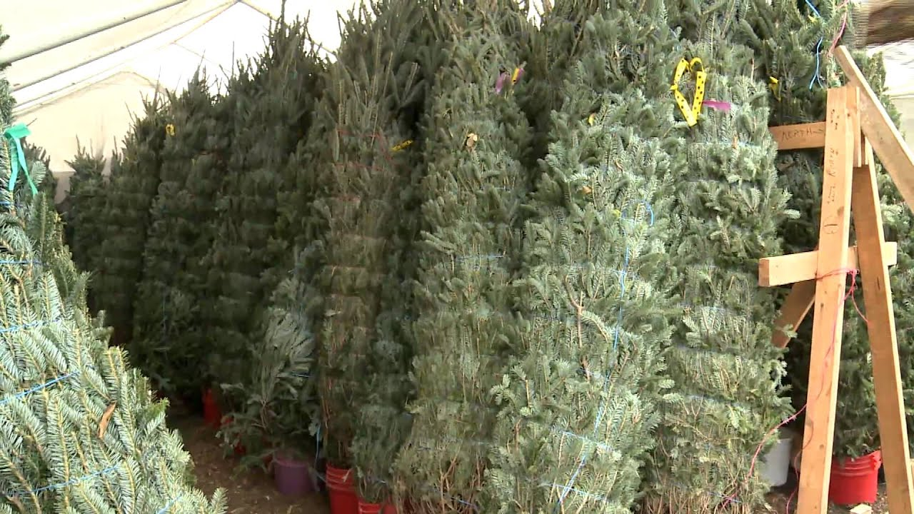 Christmas Time in Texas - Silo Christmas Tree Farm - YouTube