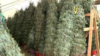 Christmas Time in Texas - Silo Christmas Tree Farm