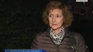 10 кошек выбросили с 6 этажа в Санкт-Петербурге.