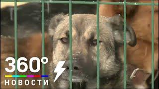 Госдума одобрила закон о защите животных