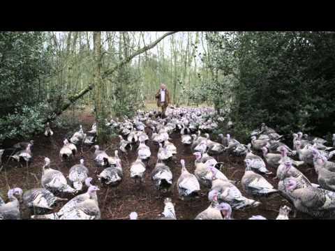 Free Range Narragansett Turkeys