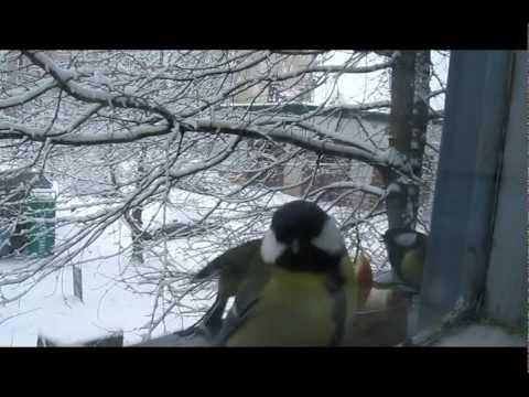 клип о поиске