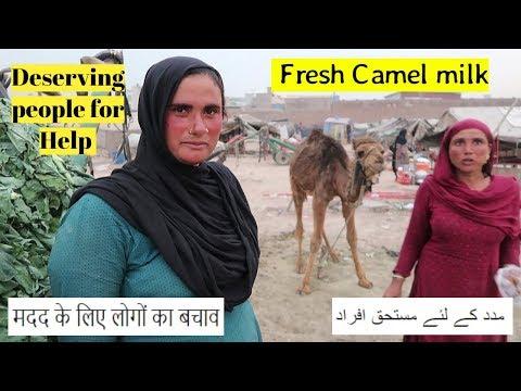 FRESHEST Camel Milk
