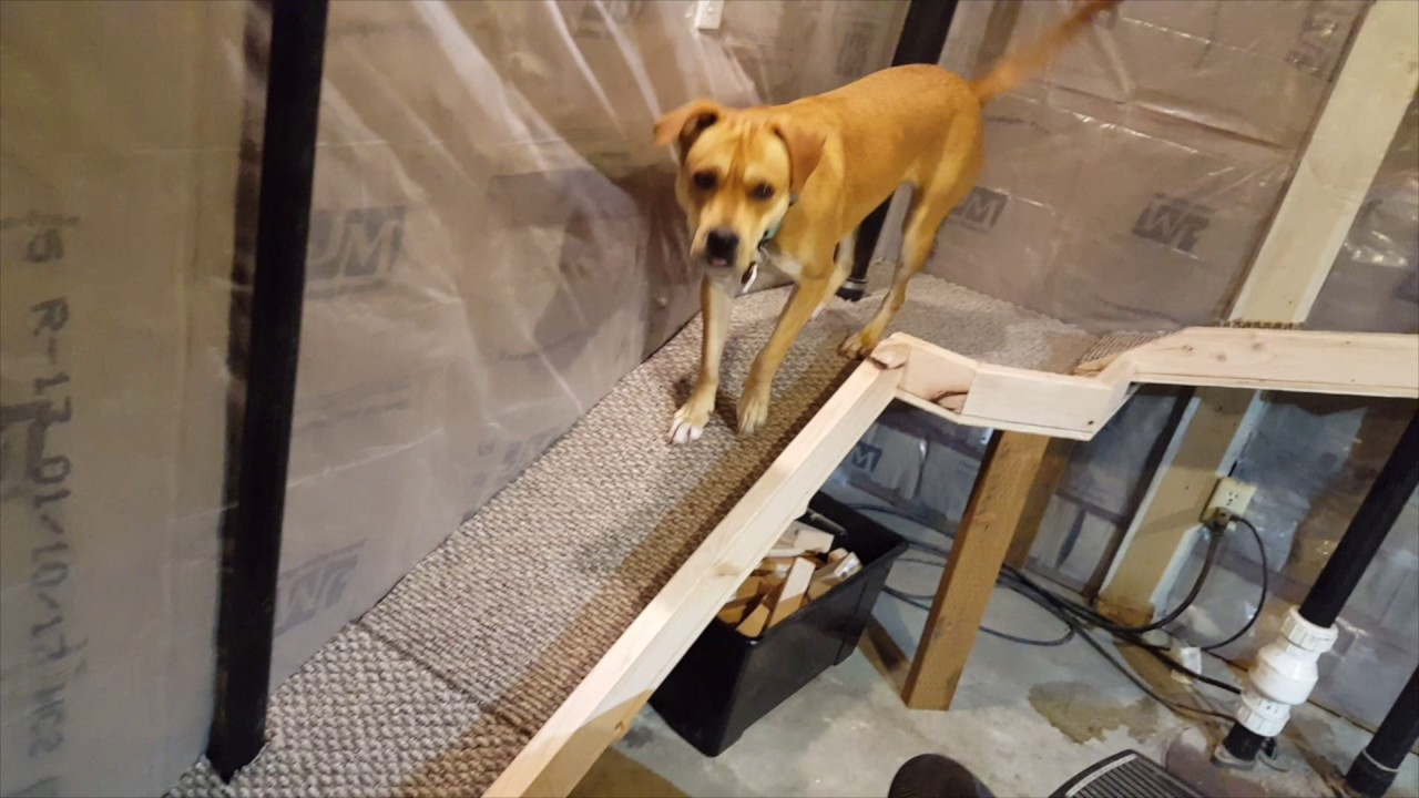 How To Make A Pet Door Out Of A Basement Window, Including Go Pro Doggie Cam