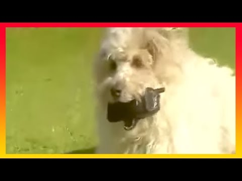 Brum 312 - MOBILE PHONE - Full Episode