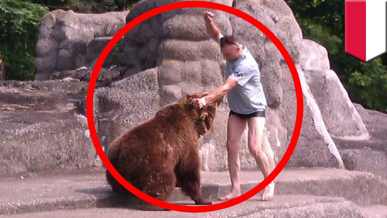 Man V Bear Polish Man Punches Bear In The Head At Warsaw Zoo - Guy captures first person video of the moment a bear attacks him