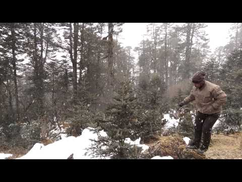 Heavy snowfall in yumthang valley