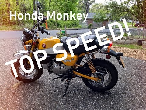 Honda Monkey Top Speed and Review